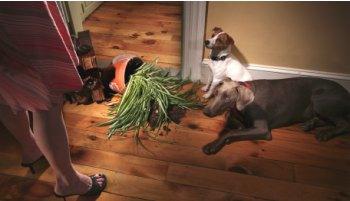 dog days of summber